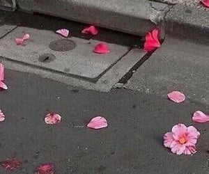 header, pink, and flower image