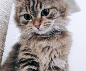 cat, kitty, kitten and cute