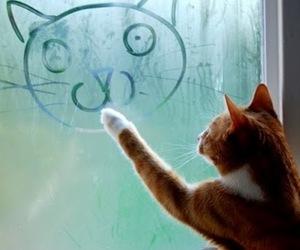 cat, animal, and window image