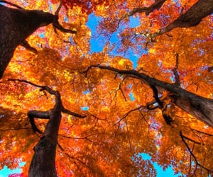 autumn, leaves, and orange image