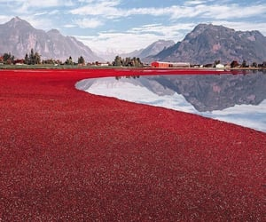 red, canada, and cranberry image