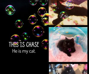 beautiful, chase, and edit image