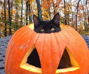 autumn, fall, and feline image