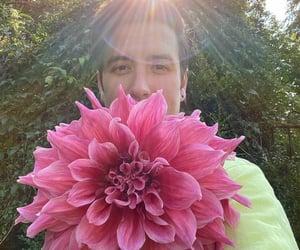 flower, guy, and big time rush image