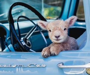 animals, blue, and car image