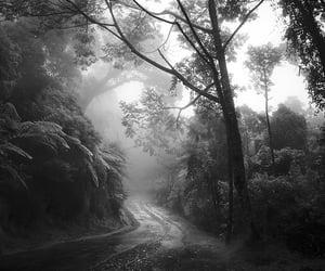 2020, Hengki Koentjoro, and tree story image