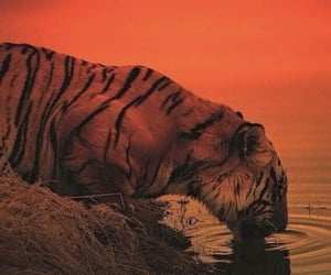 iphone, tigre, and we heart it image