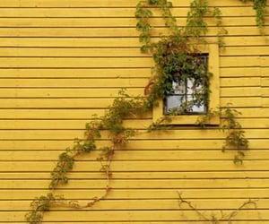 aesthetic, plants, and yellow image