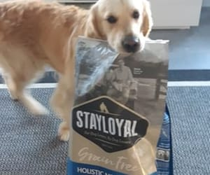 dog food online and stay loyal image