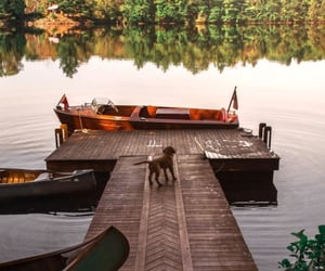 dock, nature, and water image