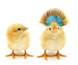 animals, chicks, and chickens image