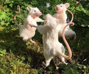 animals, dance, and mice image