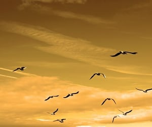 bird, Flying, and cloud image