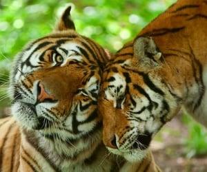 pair, wildlife, and animals image