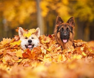 dogs, pair, and leaves image