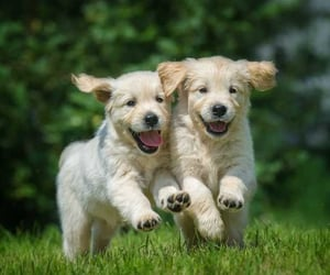 pair, cute, and puppies image