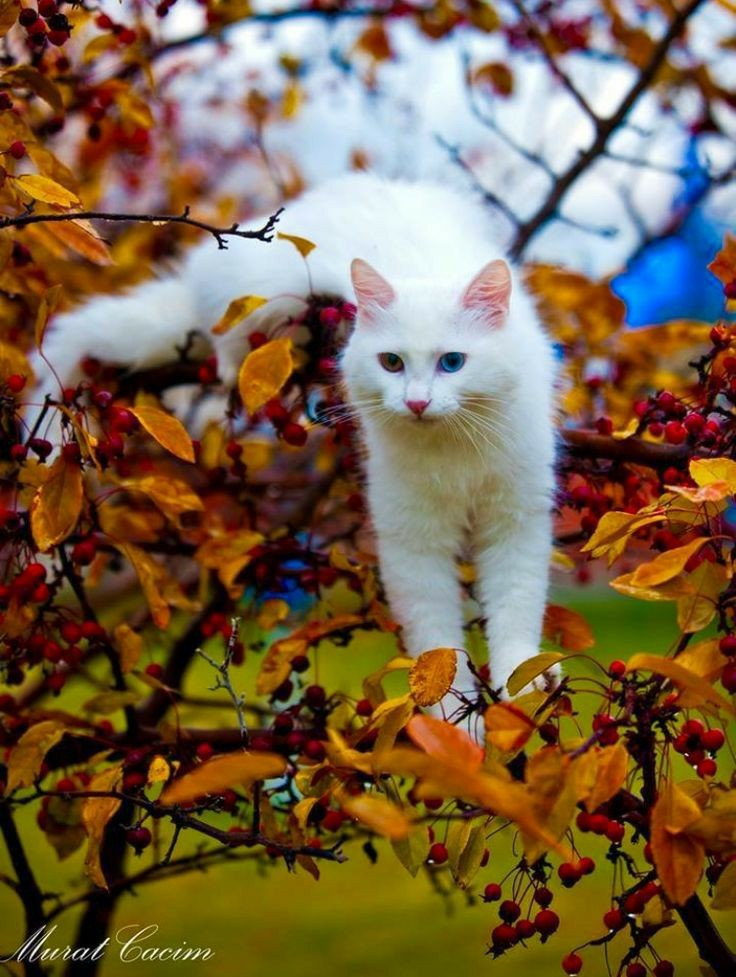adorable, beautiful, and fall image