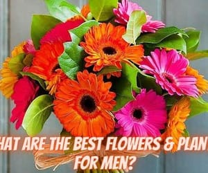 flowers for men, plants for men, and perfect flowers for men image