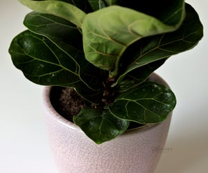 photography, plant, and ficus image