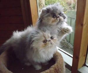 animals, baby animals, and cat image