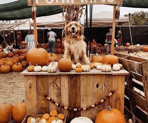 dog, pumpkin, and puppy image