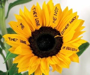 flowers, words, and yellow image