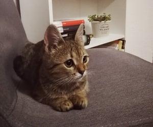 adorable, kitty, and like image