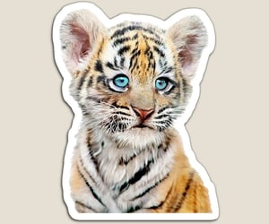 baby tiger, magnet, and nursery magnet image