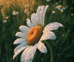 The beautiful daisy flower under the sunlight