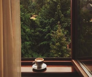 coffee, tree, and nature image