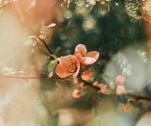 blossom, flower, and soft image