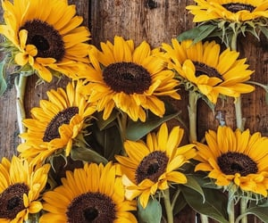 flowers, sunflower, and aesthetic image