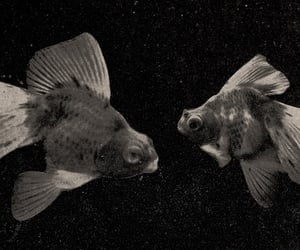 fish, photography, and picture image