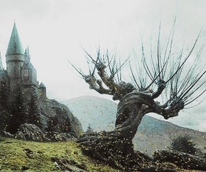 harry potter, hogwarts, and whomping willow image