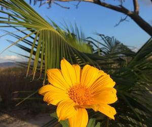 Nature florish