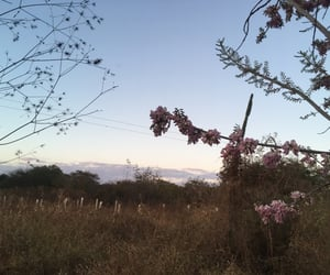 autoral, sunset, and flowers image