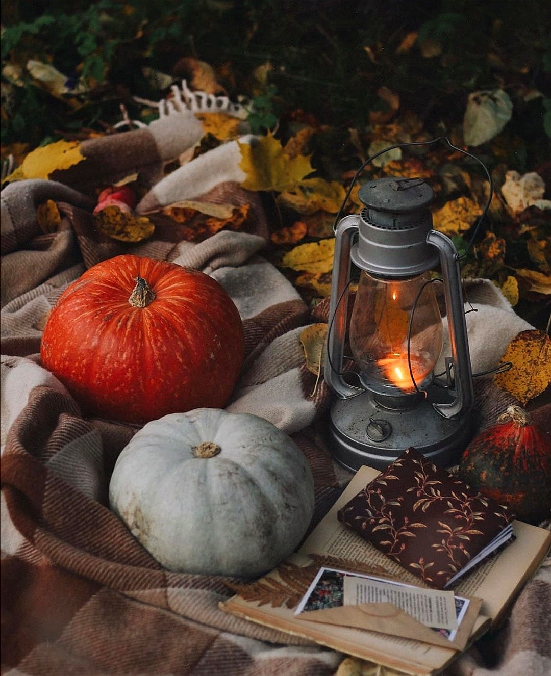autumn, blanket, and fall image