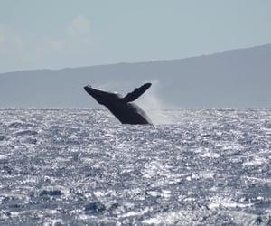 maui, hawaii, and ocean image