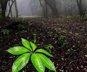 belleza, niebla, and bosque image