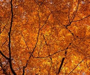 autumn, orange, and crispy weather image
