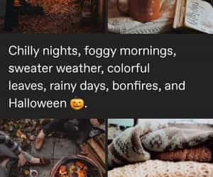 cozy, fall, and sweater weather image