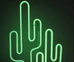 aesthetic, cactus, and wallpaper image