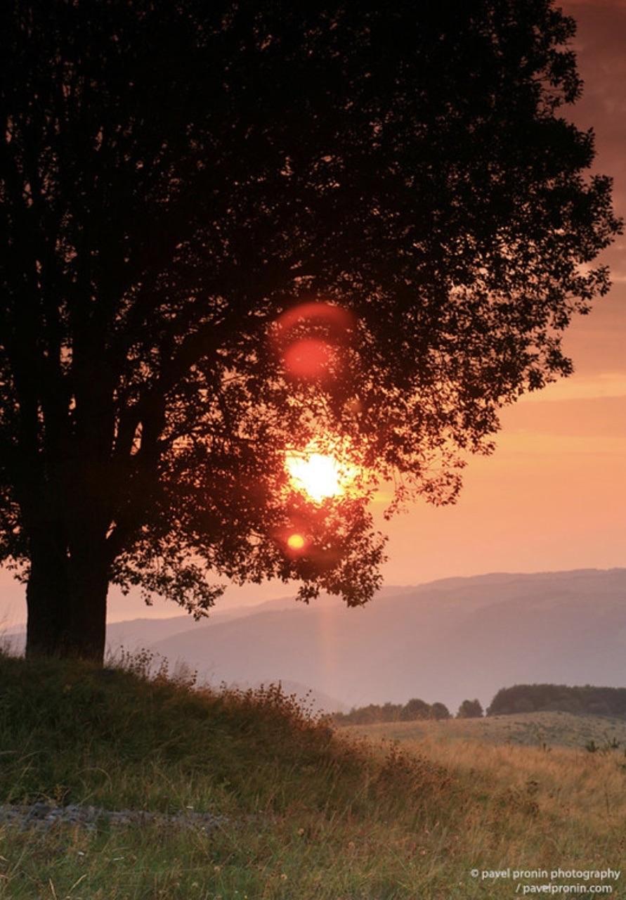 autumn, nature, and shine image