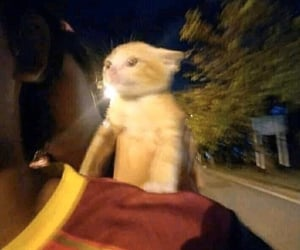 cat, funny, and fast image