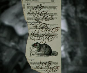 lies, Paper, and rat image