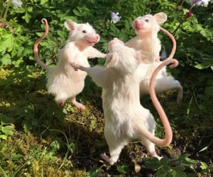 happy, friends, and rats image