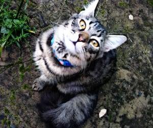 cats, Gatos, and lindos image