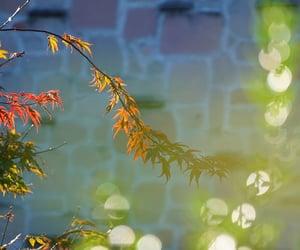 leaf, 植物, and 光 image