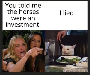 equine, expensive, and horses image