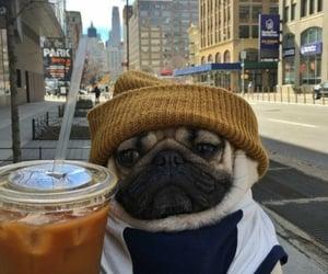 dog, pug, and coffee image